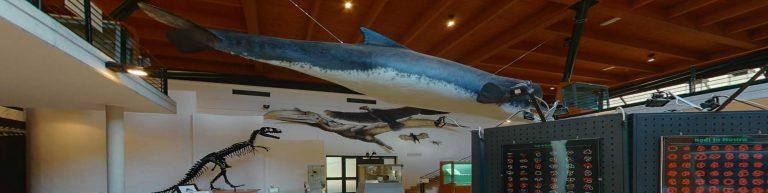 Il Museo dell'Ambiente: una storia lunga più di quarant'anni